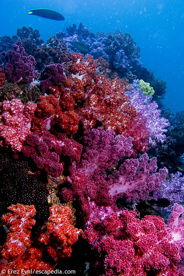 Abundance of soft corals @ 7 Colour Rock